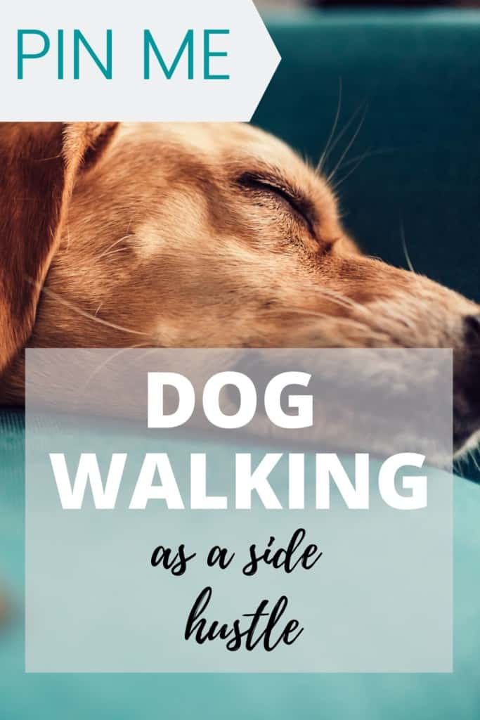 how to become a dog waker