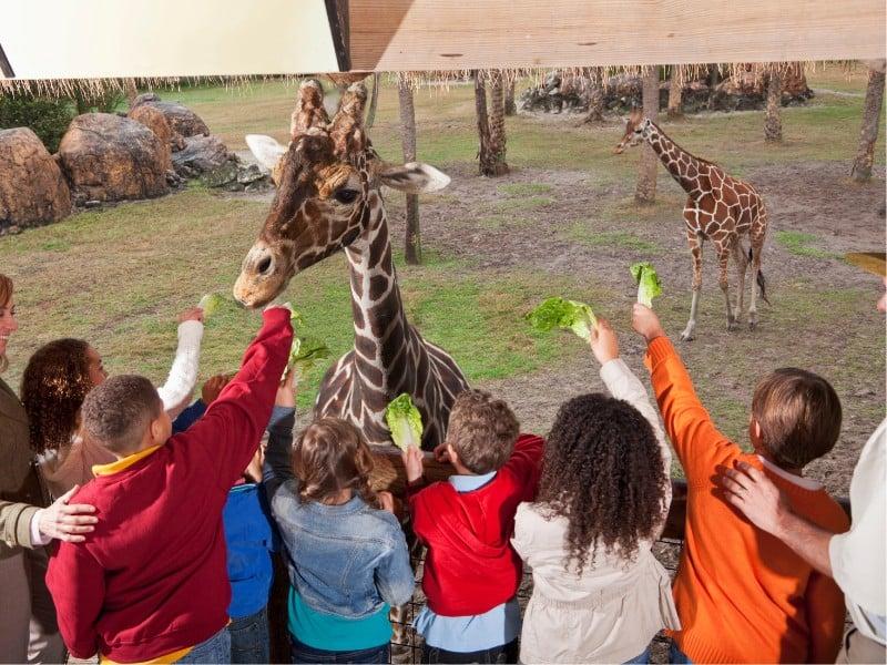 family zoo activities